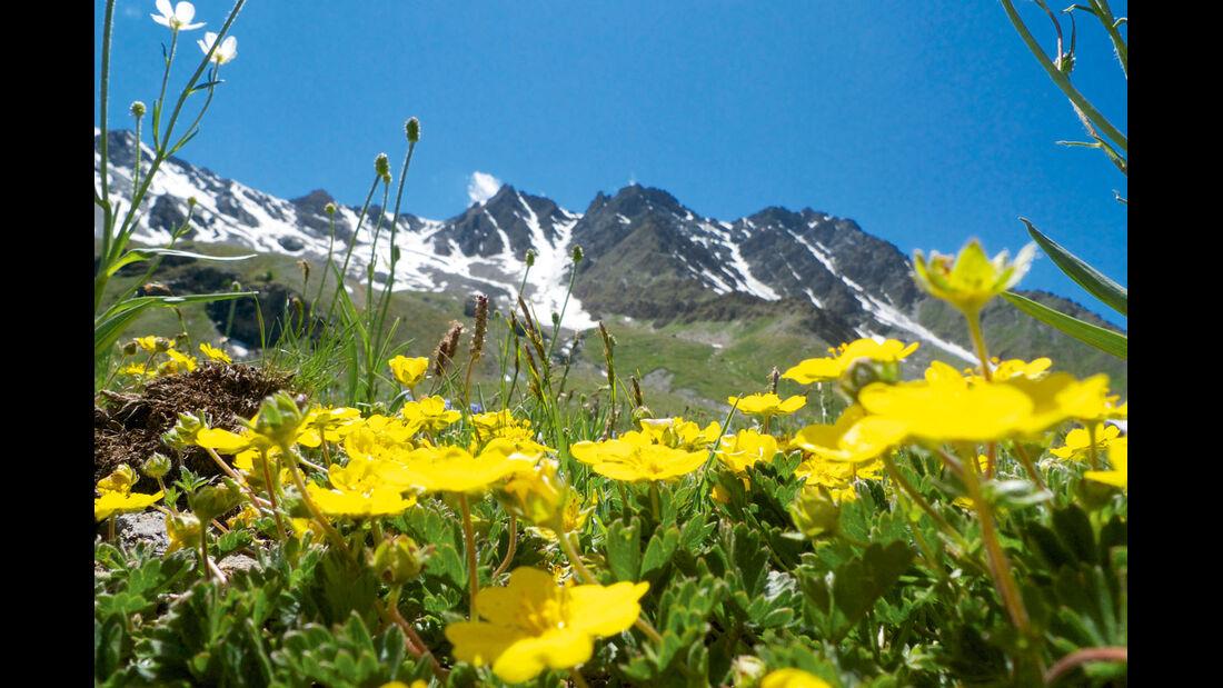 Alpenblumen