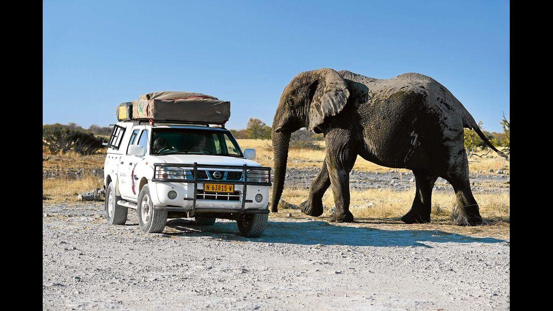 Begegnung Geländewagen und Elefant
