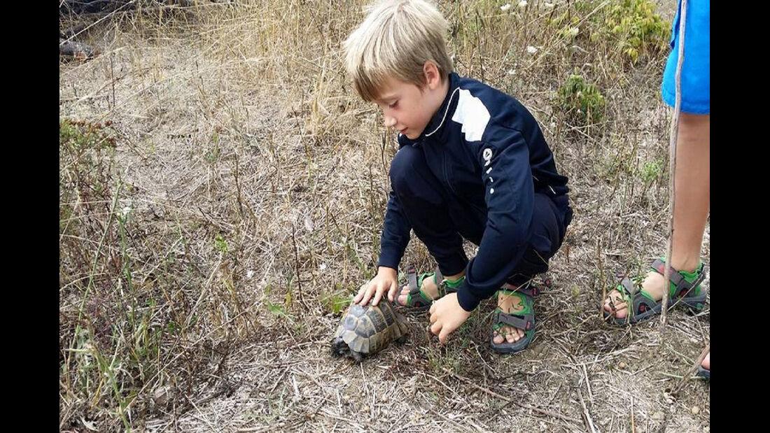 Benni Schildkröten