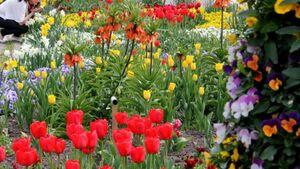 Blumen Bad Füssing