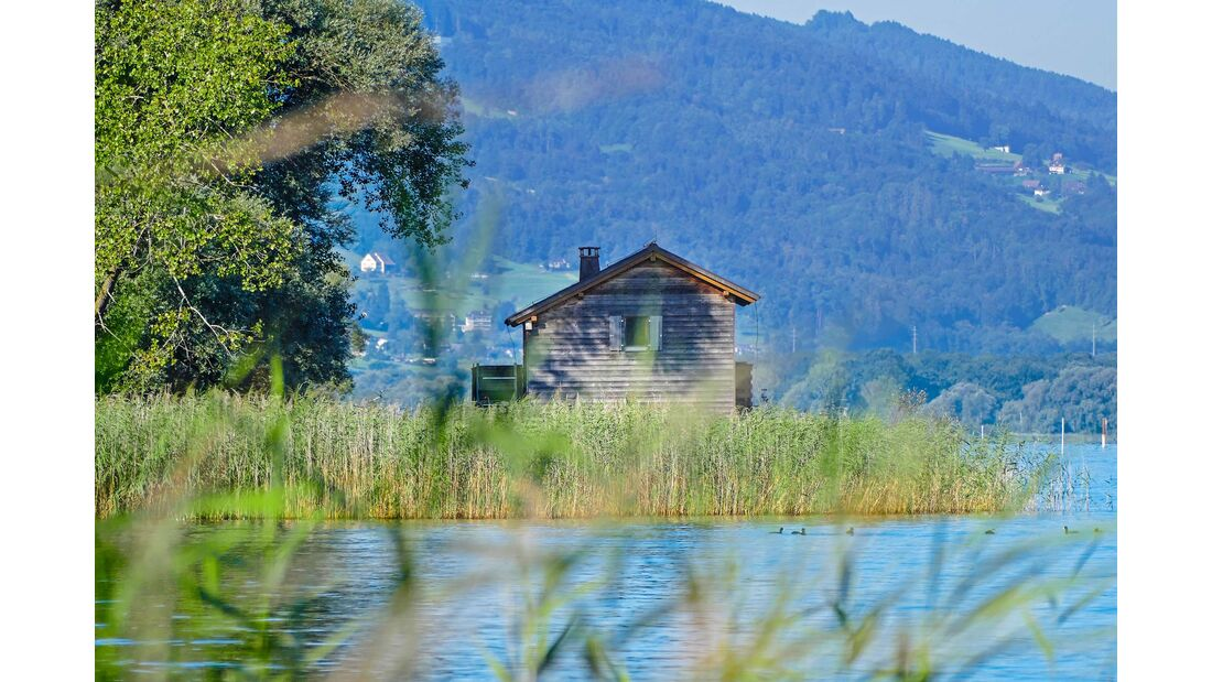Bodensee Halbinsel Rohrspitz