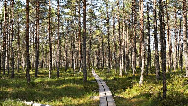 Campingbus-Reise Baltikum