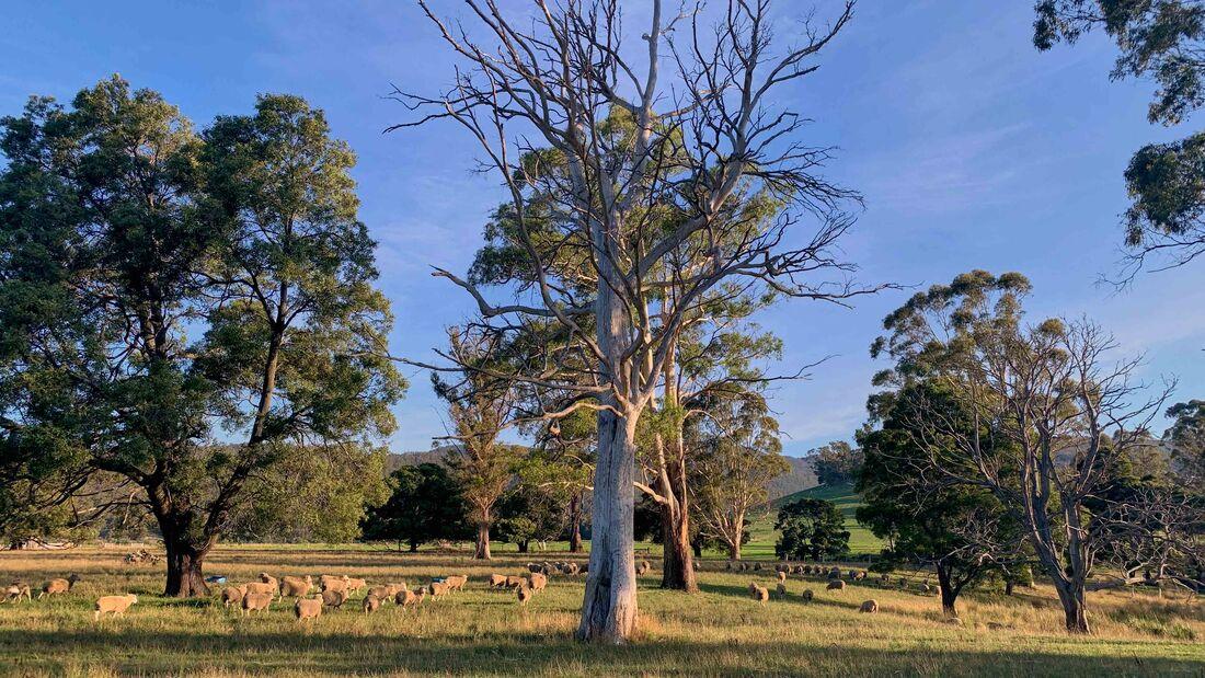 Columbia Falls Camp, Tasmanien