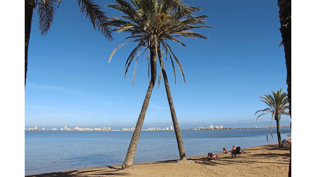 Costa Cálida Palmen