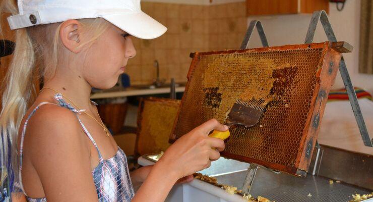 Der Camping Schwanenplatz veranstaltete im Juli einen Naturerlebnis-Tag, bei dem sich alles rund um Bienen und andere Nützlinge drehte.