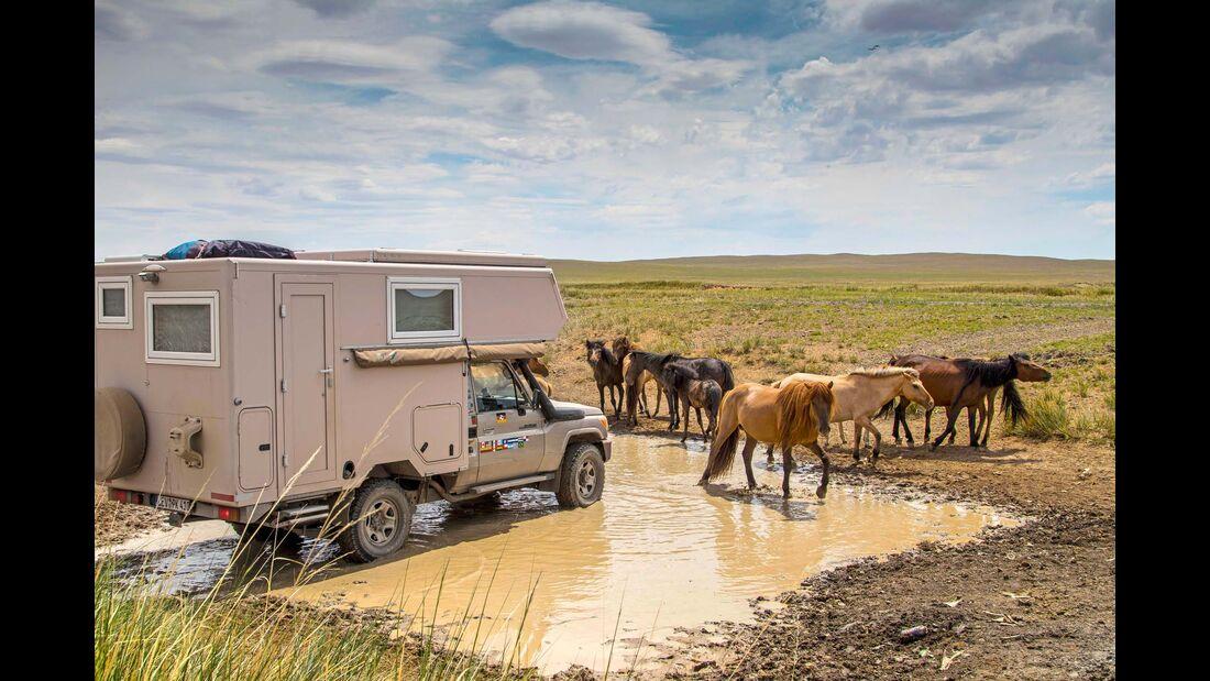 Die Weite der Steppe teilen sich die Vierkottens nur mit einer Herde Pferde.