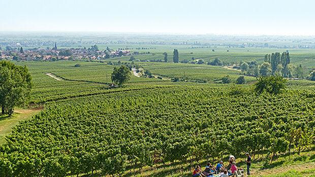 Direkt in den Weinbergen wenig unterhalb der Villa Ludwigshöhe – mit Ausblick auf das Rheintal.
