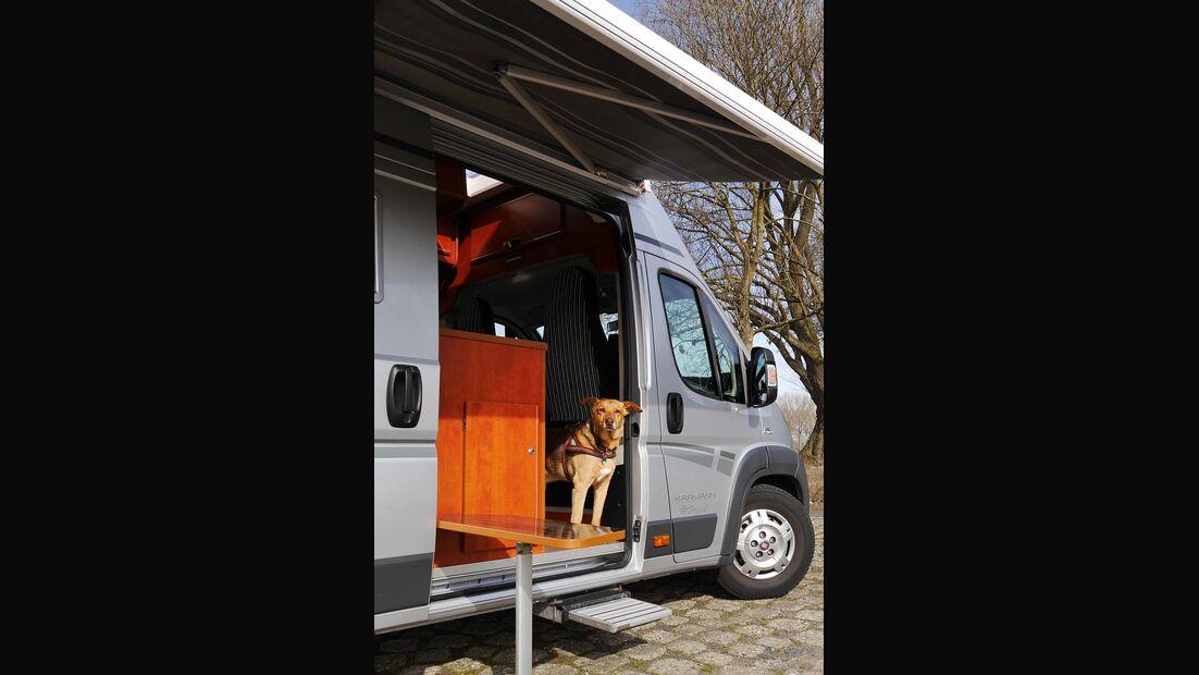 Dog-Camper
