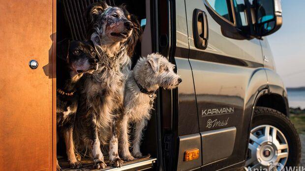 Dog-Camper Reisemobilvermietung
