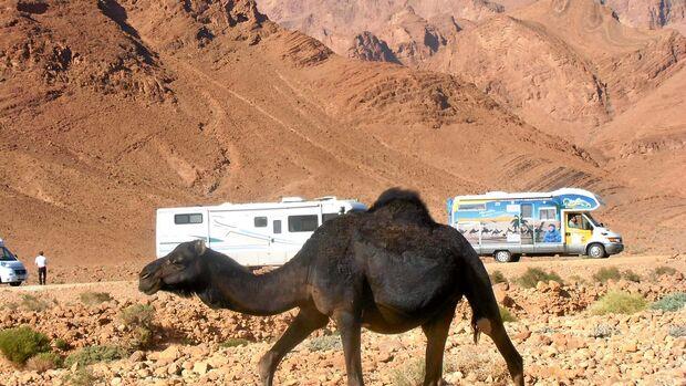 Dr.Ammon Tours Marokko