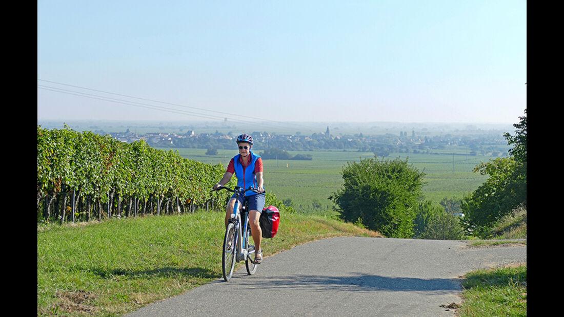 Ein Weinberg ist immer in der Nähe, wenn man in der Pfalz radelt.