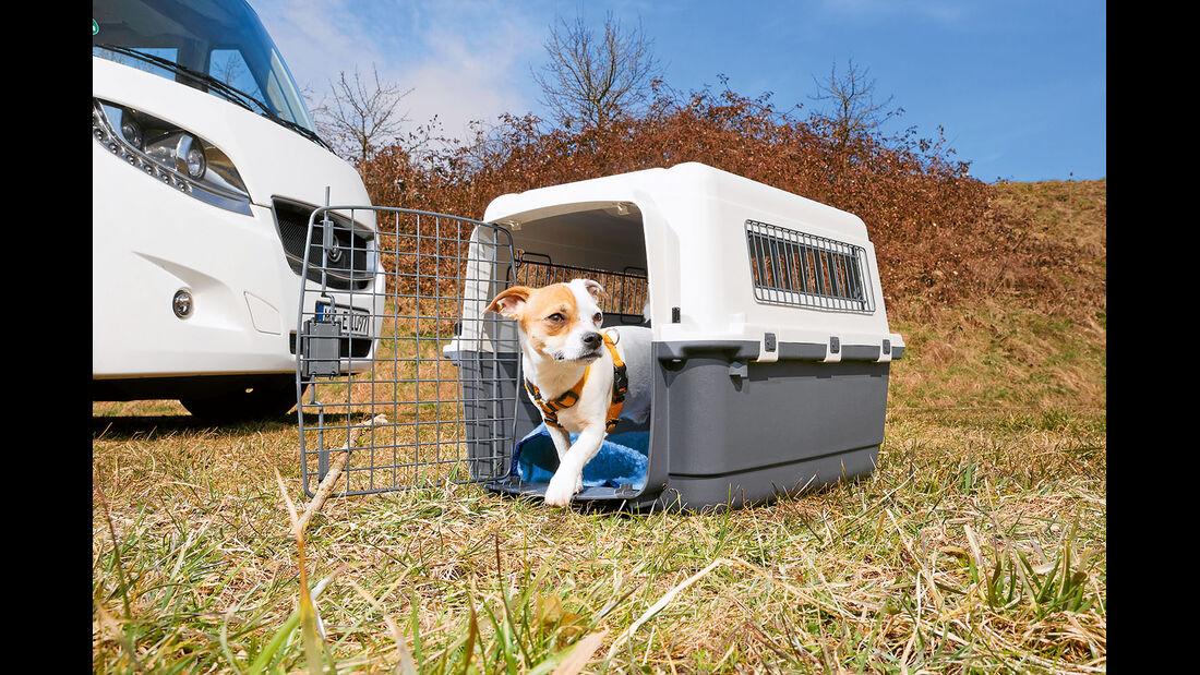 Eine Transportbox sollte so gross sein, dass sich der Hund darin bequem umdrehen kann.