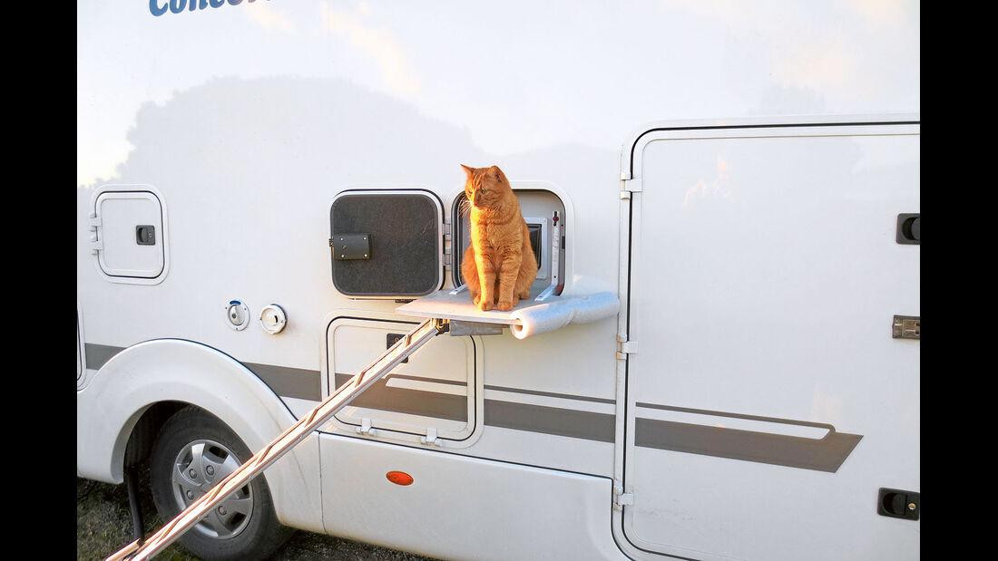 Emil hat sich an das Leben im Reisemobil gewoehnt.