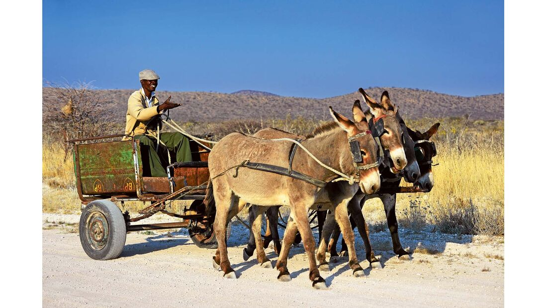 Esel-Quadriga in Namibia