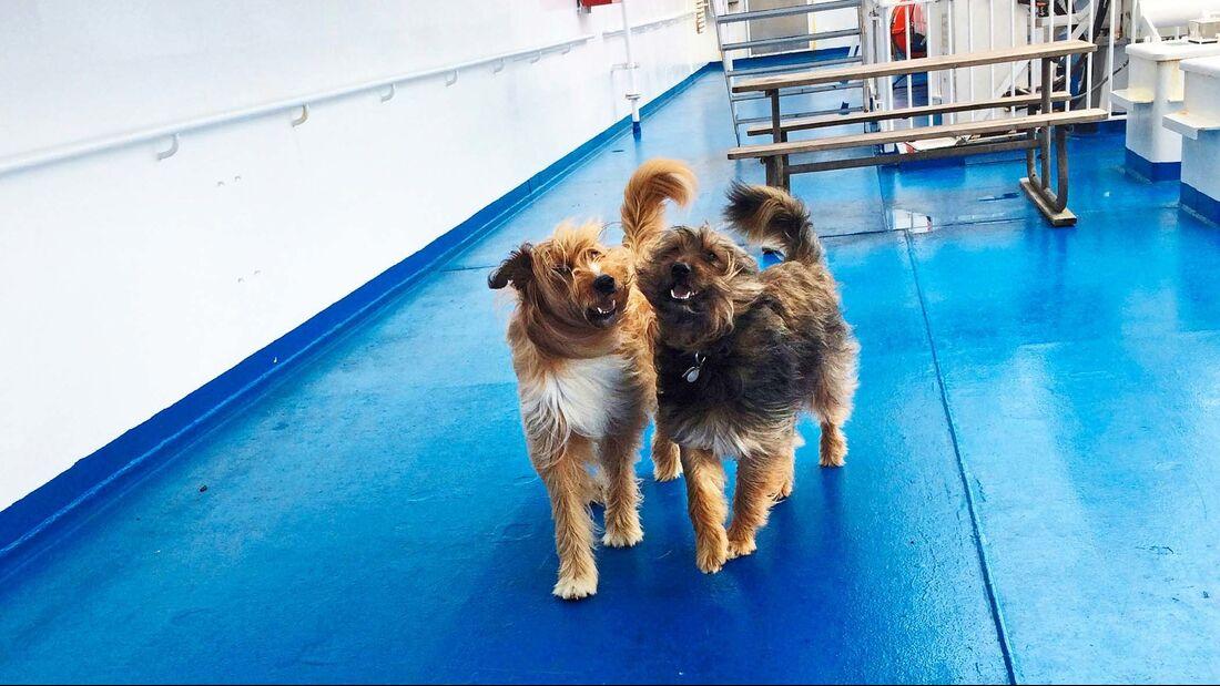 Fähren in Nordeuropa Hunde an Bord