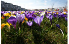 Frühlingsfoto