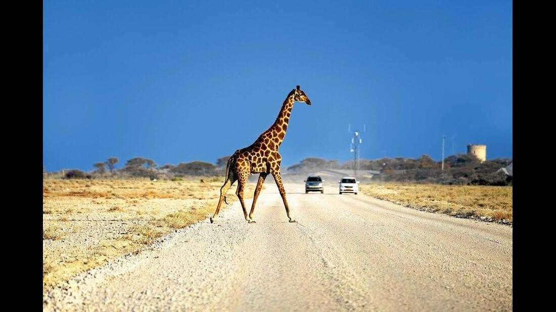 Giraffe in der Etosha-Pfanne