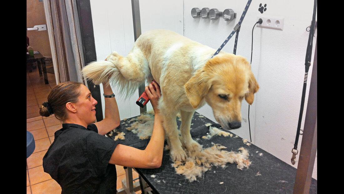 Hundehaare für Staubsaugertest
