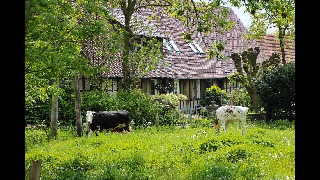 Im weiten Land zwischen Ibbenbüren und Münster gibt es große Höfe mit ausgedehnten Wiesen und Weiden.
