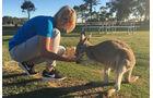 Kängurus füttern