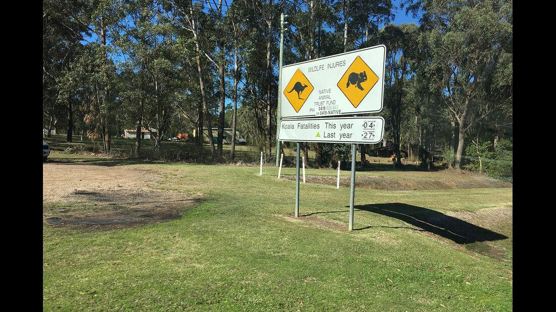 Koalas in Gefahr