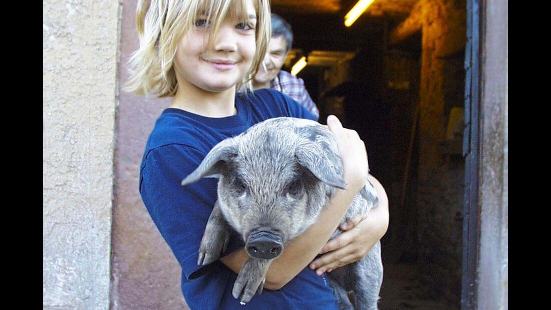 Landvergnügen Kind Schwein