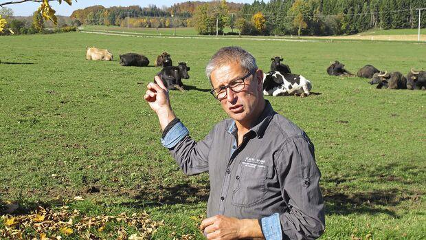 Landvergnügen Weide Kühe