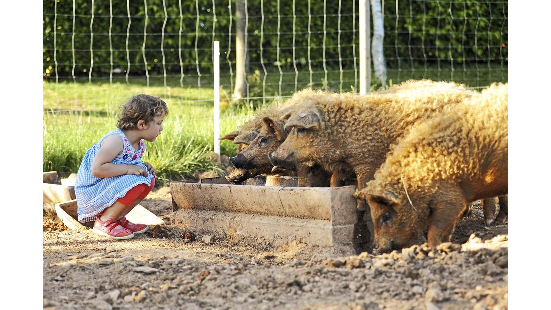 Landvergnügen schwein