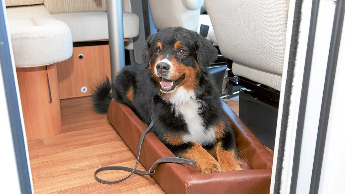 Leser-Workshop: Hund an Bord