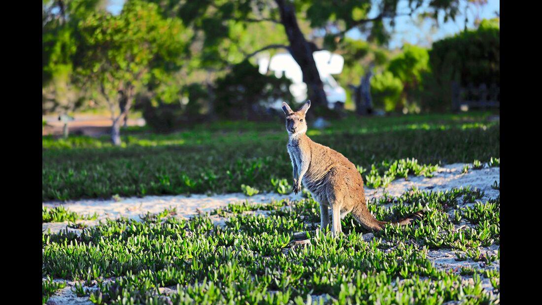 MT Westaustralien Känguru Wilderness Retreat