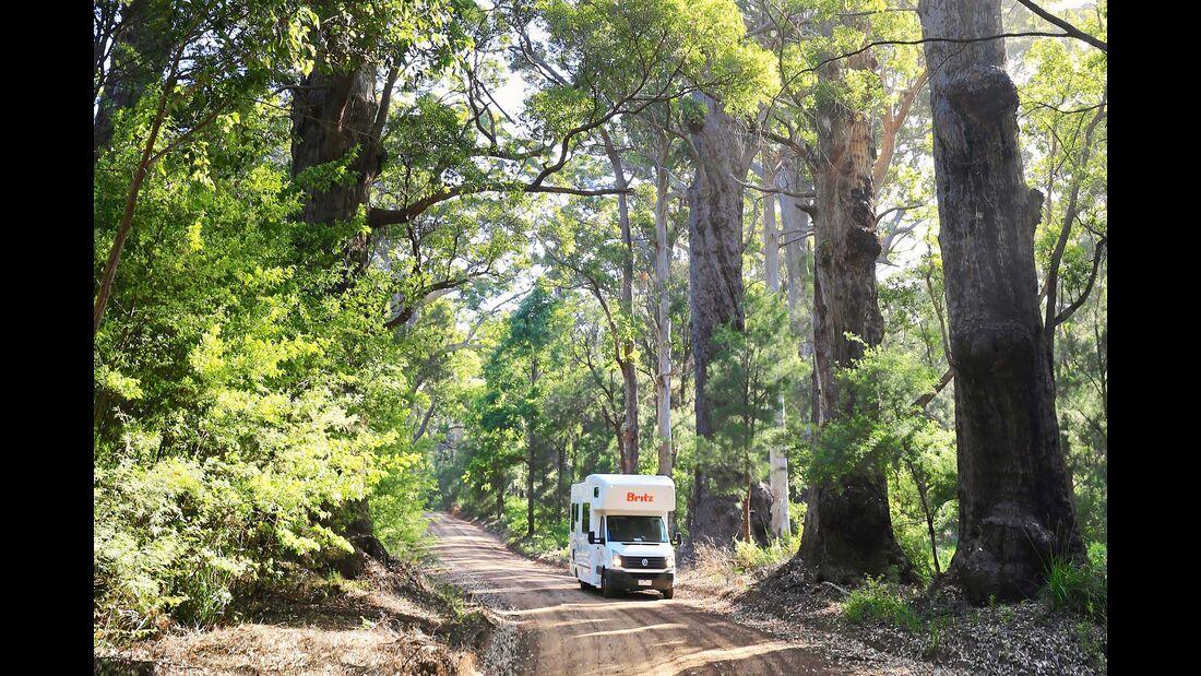 MT Westaustralien Valley of the Giants