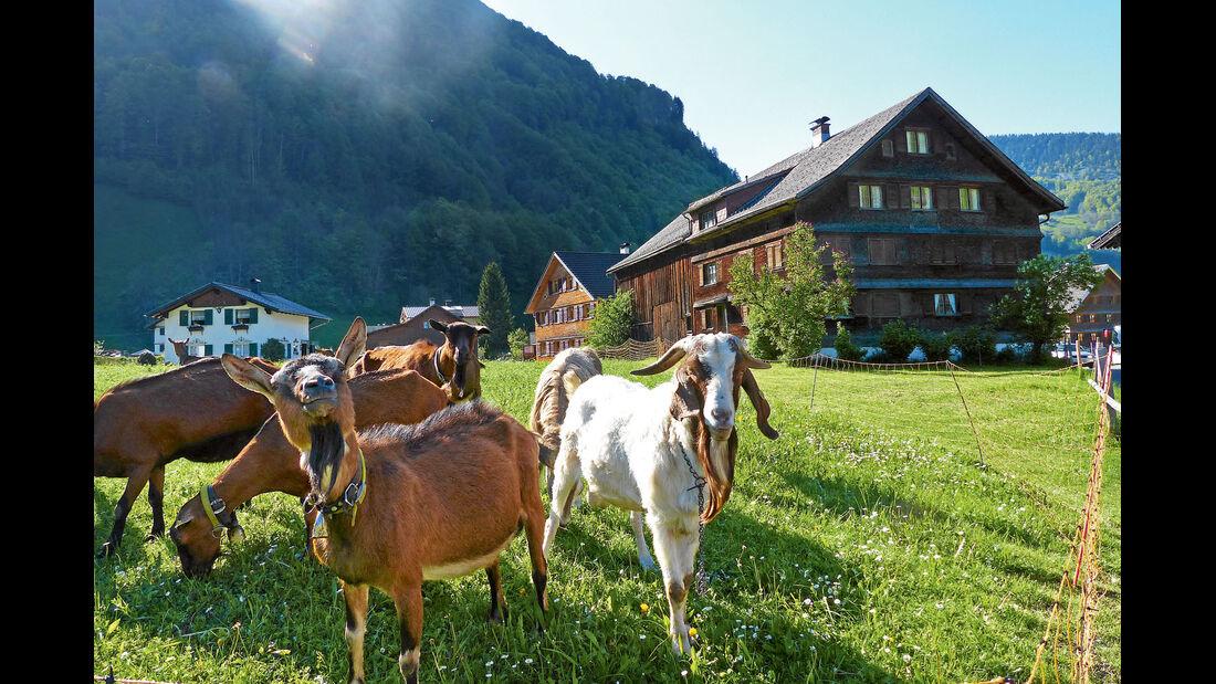 Mobil-Tour: Vorarlberg, Mellau