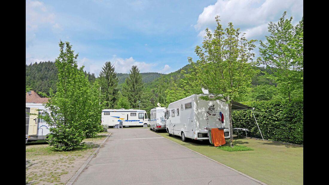 Münstertal: die Stellflächen vor dem beliebten Komfortcamping.