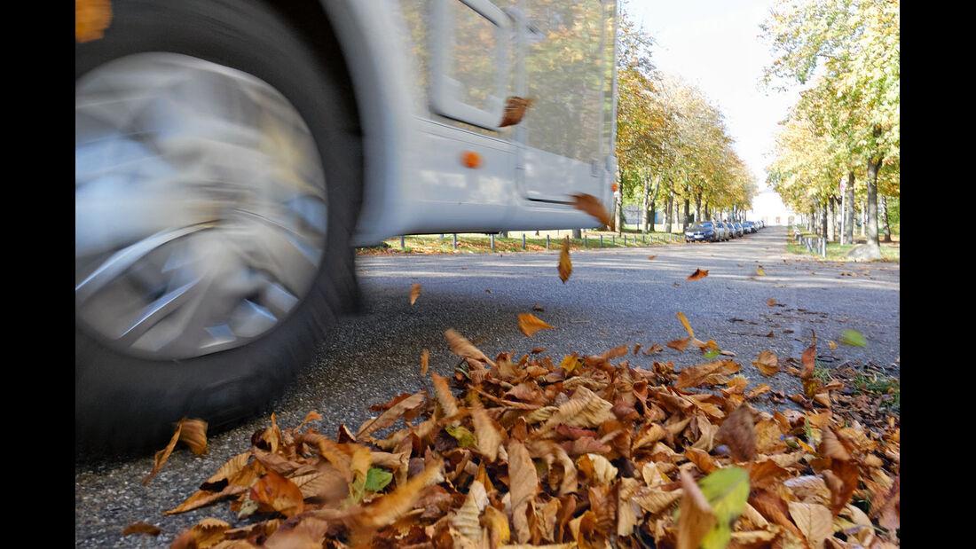 Nasse Blätter auf der Straße.