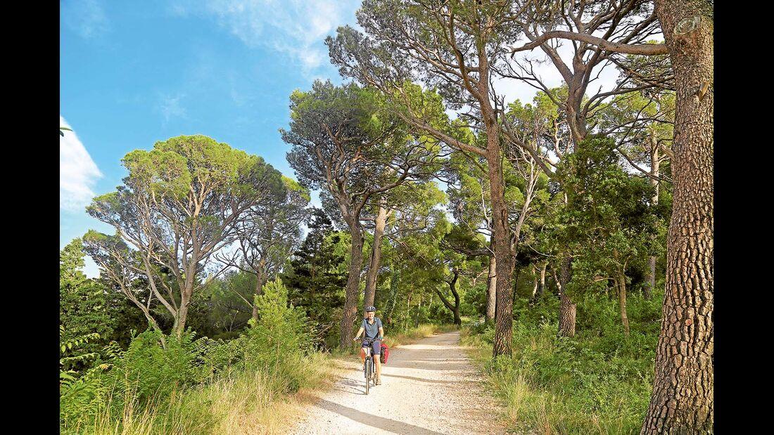 Pinienwald zwischen Biokovo-Gebirge und Küste