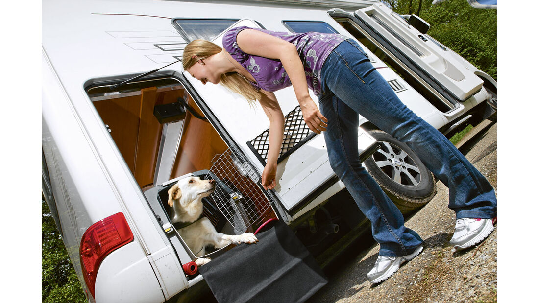 Ratgeber: Reisen mit Tieren
