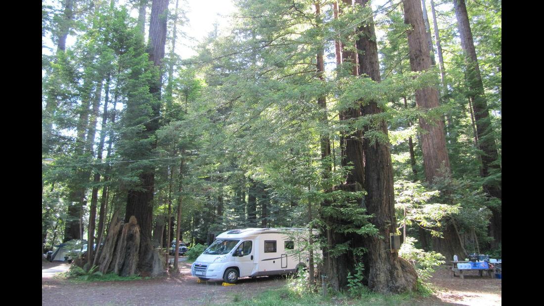 Redwood Park