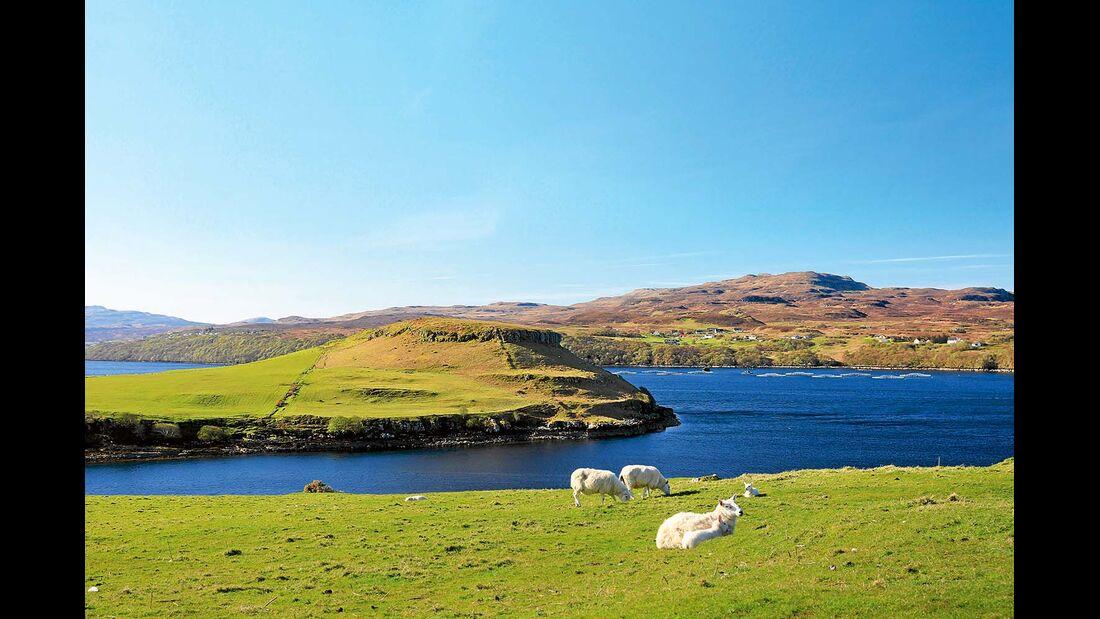 Schafe an der Küste