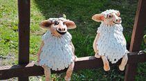 Schafsköppe bei Osterode.