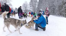 Schlittenhunde in den Allgäuer Alpen