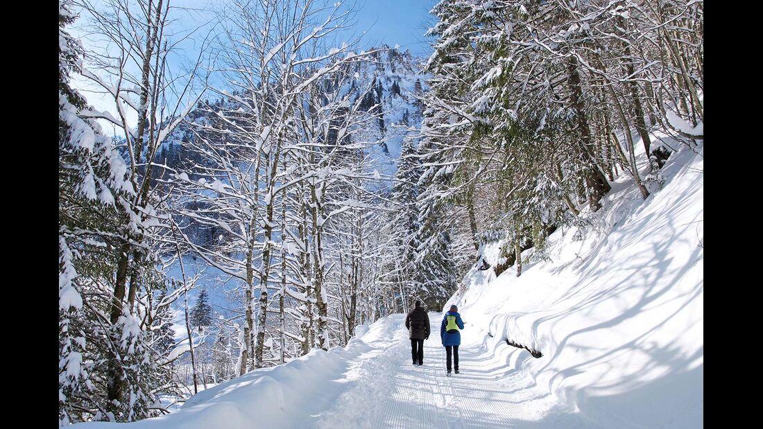 Schneebedeckter Waldweg in den Allgäuer Alpen