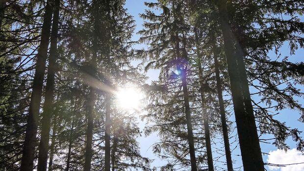 Schwarzwald Wohnmobil-Reise