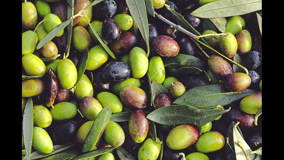 Sizilien Oliven