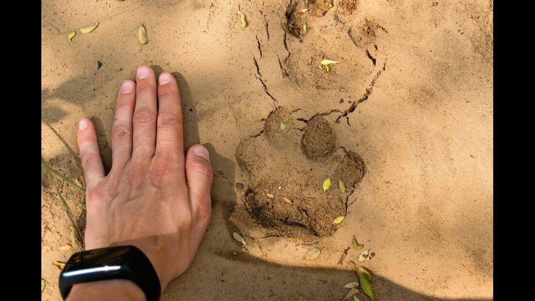 Spuren eines Leopardens