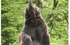 Tierfreigelände Neuschönau
