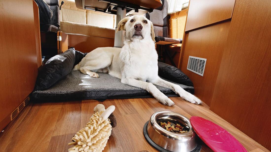 Urlaub in Sylt mit Hund