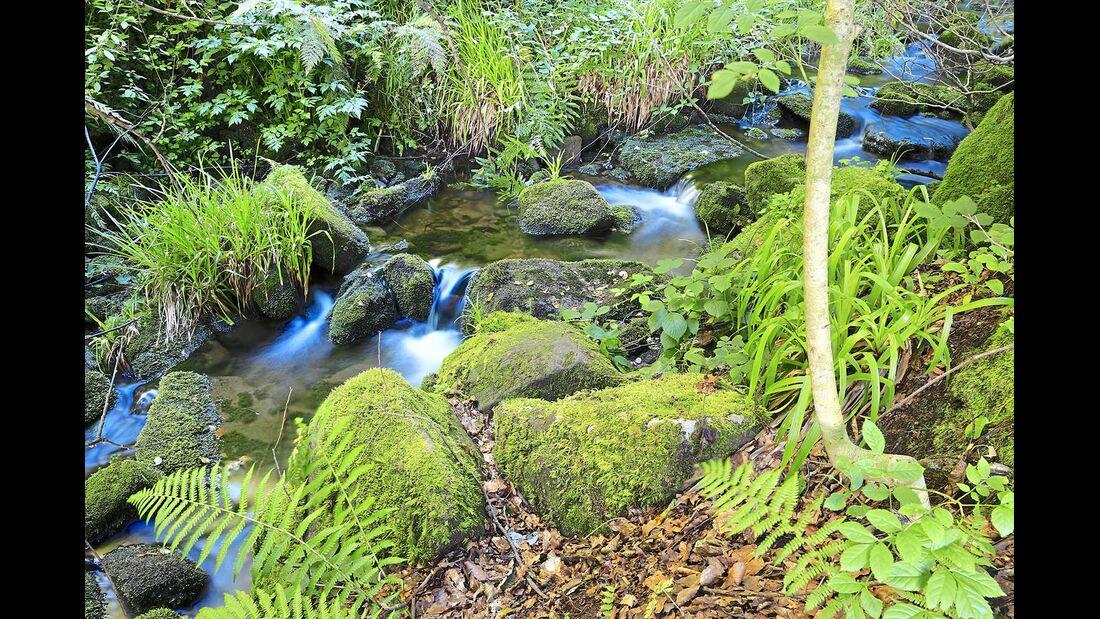 Von mehreren Quellen und dem See gespeist, plätschert der Seebach munter ins Tal hinab.