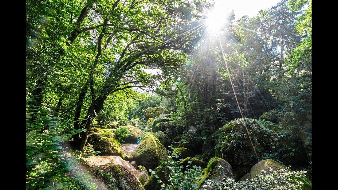 Wald bei Huelgoat