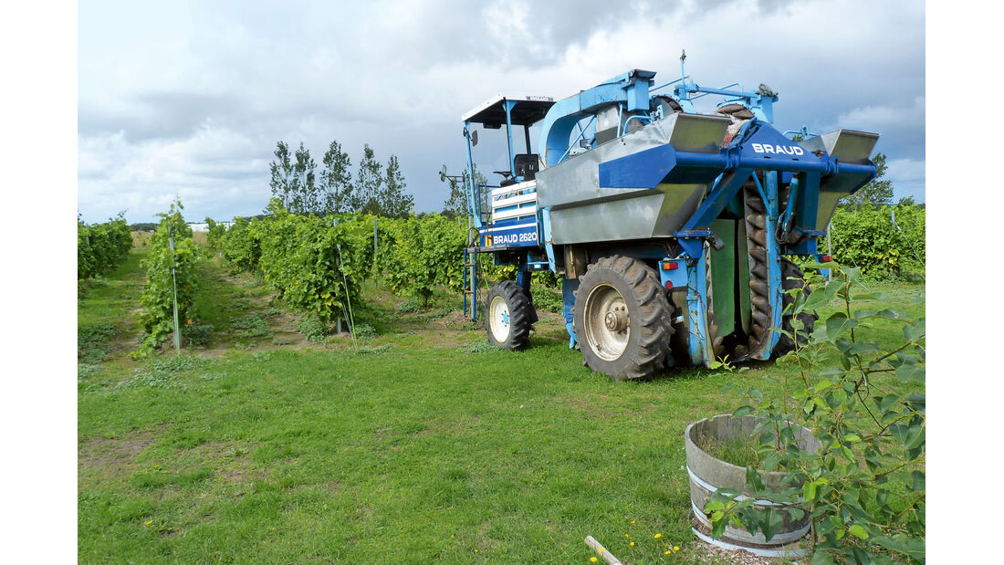 Wein waechst auf Gotland und auf Bornholm.