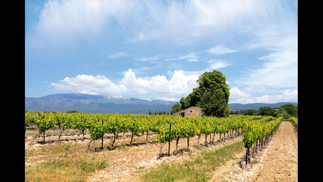Weinanbau in der Provence